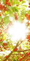 Raggi Uv nel Sole